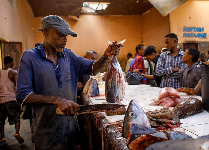 Somalia: FAO, EU Launch Food Security Project
